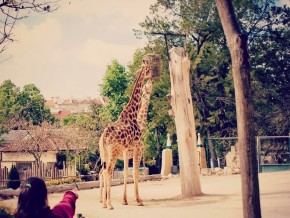 Zoológico de Lisboa